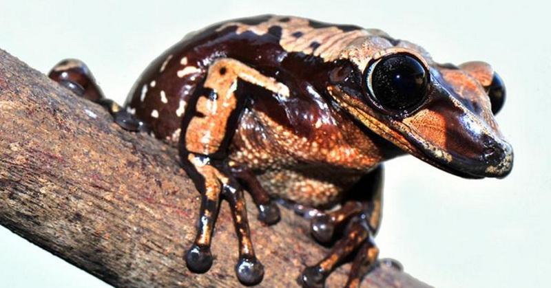 https: img-z.okeinfo.net content 2018 02 11 56 1857969 racun-katak-ini-lebih-kuat-25-kali-ketimbang-ular-tPXaSfzB08.jpg