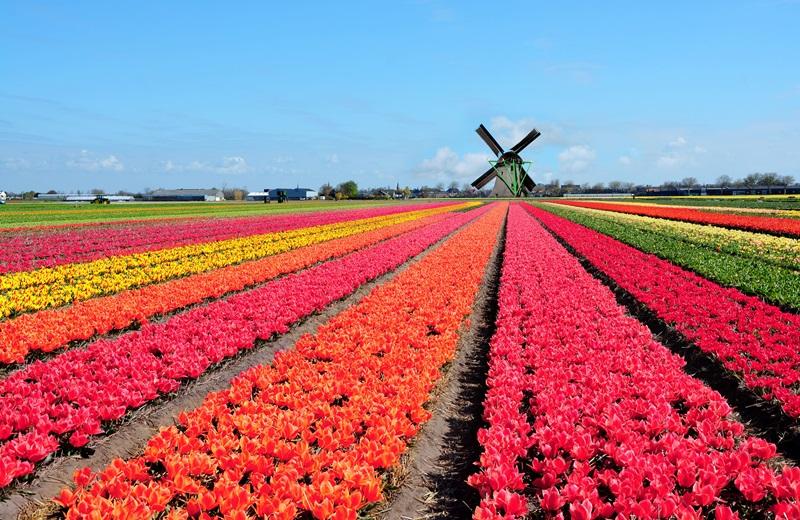 https: img-z.okeinfo.net content 2018 02 13 406 1859031 festival-keukenhof-belanda-pesona-hamparan-bunga-tulip-cantik-dan-megah-bswqn2hHjp.jpg
