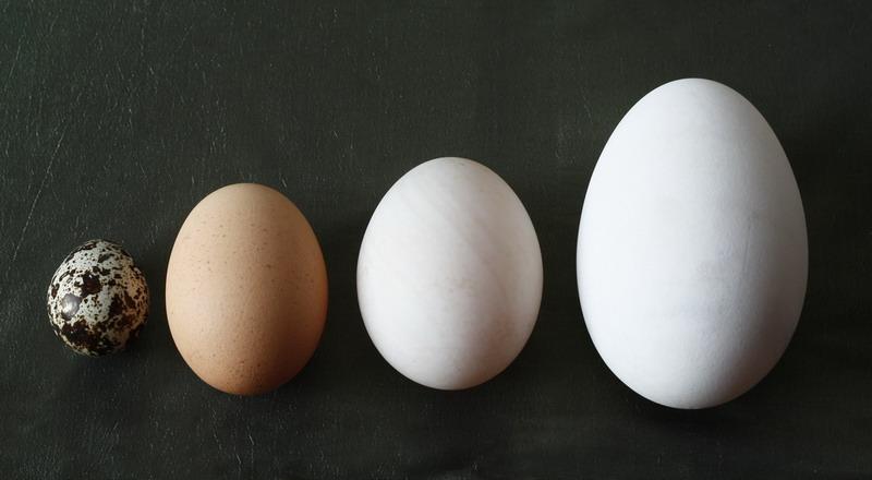 https: img-z.okeinfo.net content 2018 02 27 298 1865410 telur-cangkang-cokelat-lebih-mahal-daripada-cangkang-putih-ini-sebabnya-ErYu6zIPo4.jpg