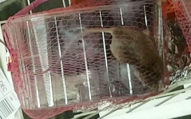 https: img-z.okeinfo.net content 2018 03 01 298 1866441 beli-paket-buah-di-supermarket-seorang-ibu-klaim-temukan-tikus-hidup-MpkZRRuVqR.jpg