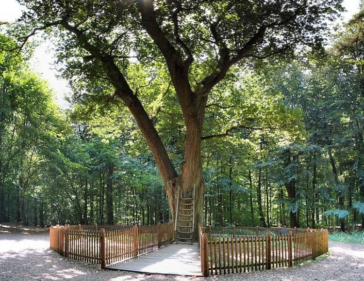 https: img-z.okeinfo.net content 2018 03 06 18 1868615 bridegroom-s-oak-pohon-tempat-pasangan-mencari-jodoh-lewat-surat-3dlkoWPQyM.jpg