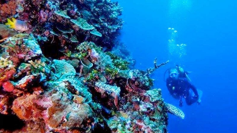 https: img-z.okeinfo.net content 2018 03 07 406 1869370 melihat-keindahan-taman-laut-olele-di-gorontalo-z8iBDCE0Su.jpg
