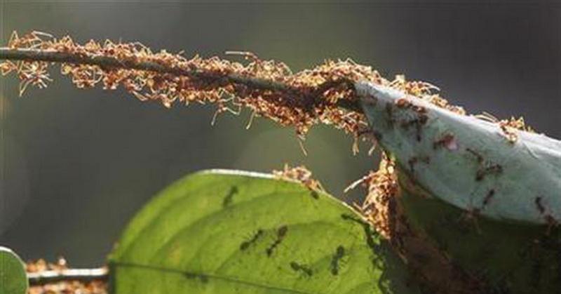 https: img-z.okeinfo.net content 2018 03 19 56 1875055 5-fakta-menarik-mengenai-semut-yang-jarang-diketahui-cC4hu44o2j.jpg