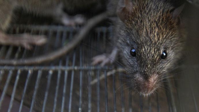 https: img-z.okeinfo.net content 2018 04 13 18 1886480 540-kilogram-ganja-hilang-polisi-salahkan-tikus-yang-kecanduan-7bfWJV60Is.jpg