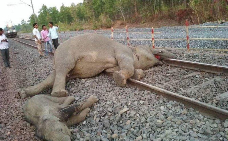 https: img-z.okeinfo.net content 2018 04 17 18 1887864 empat-ekor-gajah-tewas-tersambar-kereta-api-di-india-HNfxsrJYOj.jpg