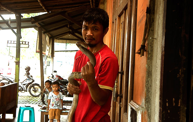https: img-z.okeinfo.net content 2018 04 30 196 1892937 20-gigitan-kobra-tak-membuat-santoso-jera-ini-kisahnya-tT3viP8fyy.jpg