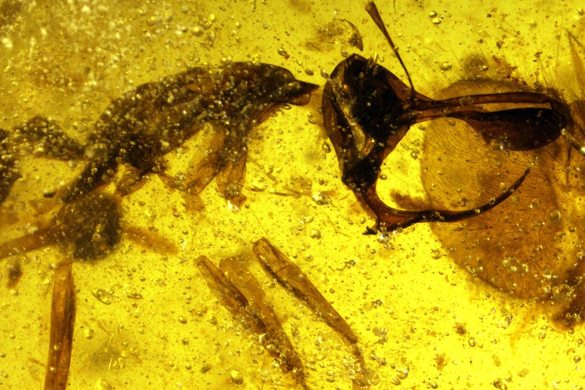 https: img-z.okeinfo.net content 2018 05 02 406 1893487 ditemukan-bentuk-semut-neraka-purbakala-mirip-setan-lihat-foto-fotonya-bikin-merinding-wL8fEYCcWQ.jpg