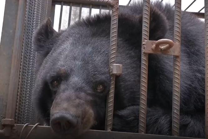 https: img-z.okeinfo.net content 2018 05 16 196 1899154 keluarga-di-china-salah-pelihara-binatang-dikira-anjing-ternyata-beruang-hitam-cnYAk8GwGc.JPG