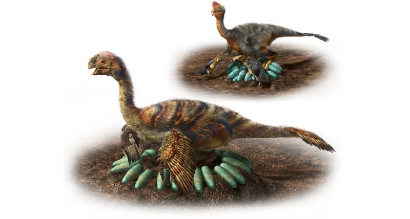 https: img-z.okeinfo.net content 2018 05 16 56 1899124 bagaimana-cara-dinosaurus-mengerami-telurnya-tanpa-pecah-V0v63sbzk0.jpg