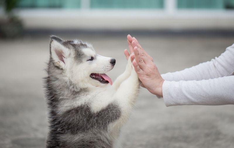 https: img-z.okeinfo.net content 2018 05 24 196 1902332 minat-pelihara-anjing-coba-baca-5-tips-ini-dulu-AKIGsMzHNh.jpg