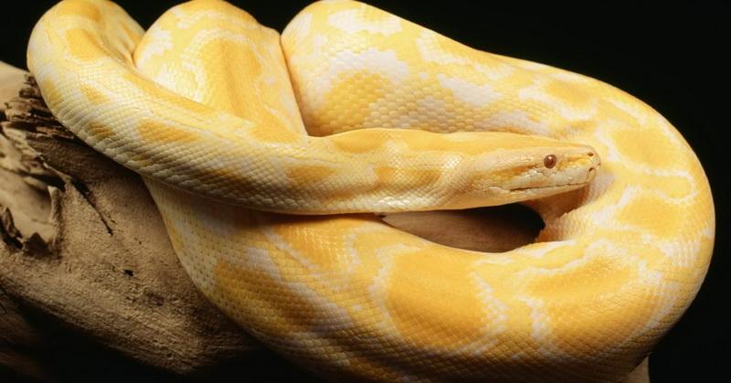 https: img-z.okeinfo.net content 2018 05 30 56 1904561 viral-video-ular-boa-melahirkan-ditonton-16-juta-kali-fcsGyNxWLP.jpg