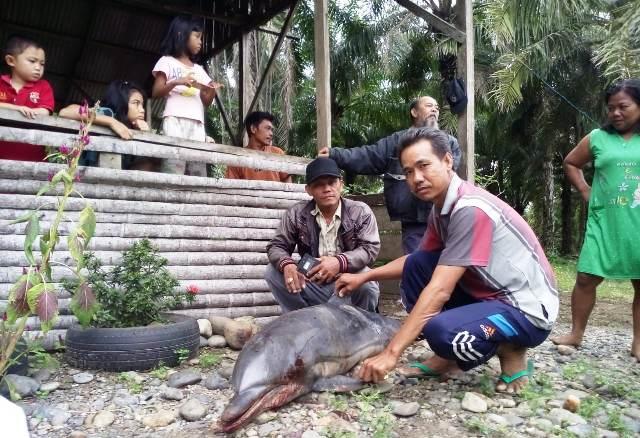 https: img-z.okeinfo.net content 2018 06 01 340 1905376 seekor-lumba-lumba-dewasa-ditemukan-mati-di-pantai-seluma-Rd0YP33v8F.JPG