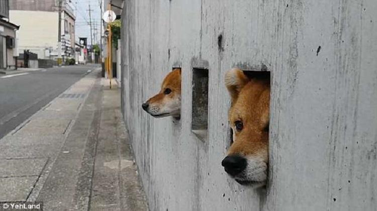 https: img-z.okeinfo.net content 2018 06 07 196 1907755 gemas-banget-3-anjing-muncul-dari-lubang-pagar-rumah-sapa-wisatawan-di-jepang-XiwOqEoyRY.jpg