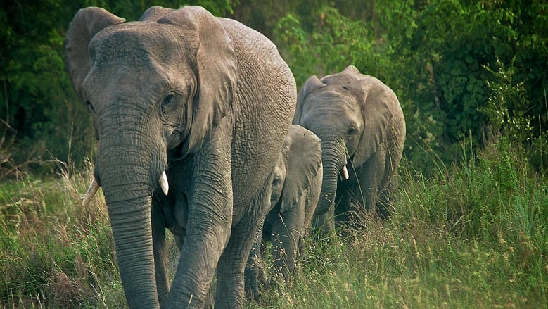 https: img-z.okeinfo.net content 2018 06 11 406 1909229 peduli-keberlangsungan-hidup-gajah-badak-bocah-7-tahun-ini-berhasil-ubah-dunia-14aj3EYfV0.jpg
