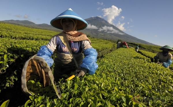 https: img-z.okeinfo.net content 2018 07 14 320 1922313 teh-indonesia-terima-penghargaan-teas-of-the-world-toJ0FzeC02.jpg