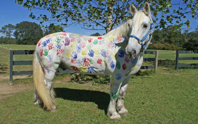 https: img-z.okeinfo.net content 2018 08 10 196 1934586 tren-melukis-di-badan-kuda-tanpa-sadar-ajarkan-anak-kejam-pada-binatang-dRltqsArNf.jpg