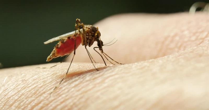 https: img-z.okeinfo.net content 2018 08 13 481 1935746 5-langkah-ini-bisa-bantu-cegah-penyakit-malaria-EOoXHbH4JJ.jpg