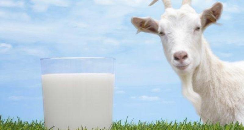 https: img-z.okeinfo.net content 2018 09 03 65 1945303 susu-kambing-etawa-disulap-jadi-jelly-suplemen-makan-manfaatnya-OYnLDVOl3K.jpg