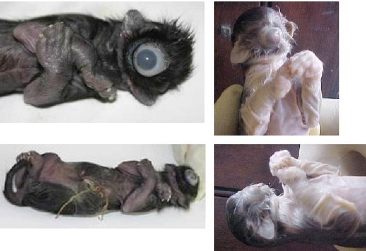 https: img-z.okeinfo.net content 2018 09 14 196 1950450 kumpulan-hewan-lahir-dengan-kondisi-langka-hanya-punya-satu-mata-KdWCLFBnvb.jpg
