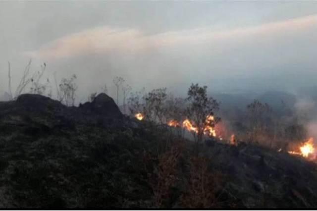 https: img-z.okeinfo.net content 2018 09 19 525 1952458 50-hektare-hutan-di-kawasan-gunung-ciremai-terbakar-bmWOM5YjSi.jpg