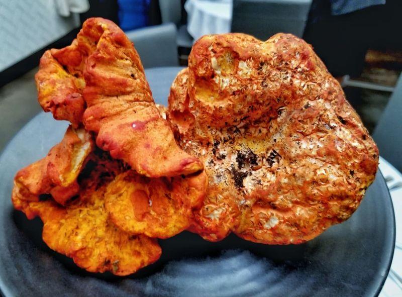 https: img-z.okeinfo.net content 2018 10 10 298 1962261 jamur-ini-punya-rasa-seperti-daging-lobster-loh-cxQ9fGc1OH.jpg