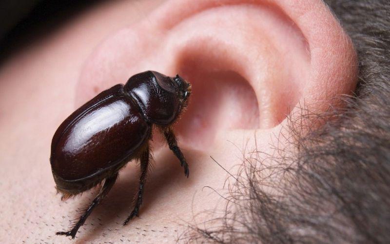 https: img-z.okeinfo.net content 2018 10 19 481 1966204 telinga-anak-zaskia-adya-mecca-kemasukan-semut-ini-bahaya-bisa-terjadi-vivpNYGwIo.jpg