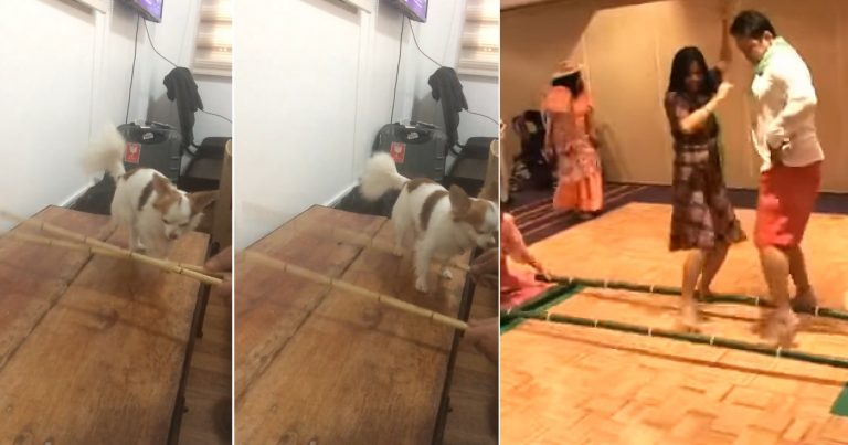 https: img-z.okeinfo.net content 2018 10 22 196 1967171 kenalkan-si-bullet-anjing-chihuahua-yang-pandai-menari-bambu-4plRDSkhWI.jpg