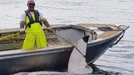 https: img-z.okeinfo.net content 2018 11 20 18 1980119 hiu-putih-4-6-meter-ditemukan-mati-di-pantai-sydney-australia-gvTsaa1FdE.jpg
