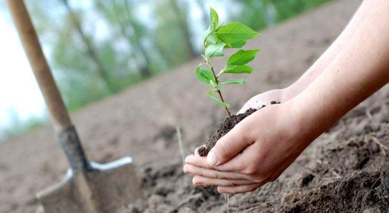 https: img-z.okeinfo.net content 2018 11 24 406 1982344 peringati-hari-pohon-sedunia-kebun-raya-gencarkan-koleksi-tanaman-obat-rnpiiXiLFE.jpg
