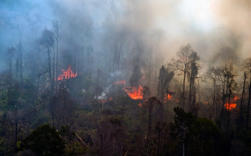 https: img-z.okeinfo.net content 2018 11 29 340 1984715 35-orang-ditetapkan-tersangka-kebakaran-hutan-di-riau-eQKFNJ6MuK.jpg