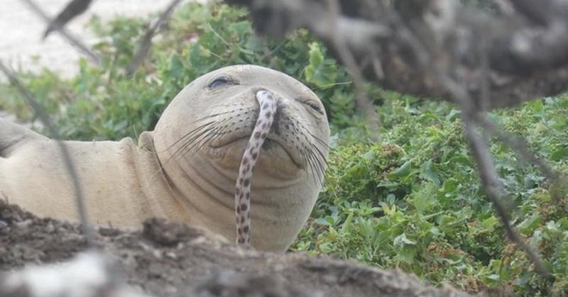 https: img-z.okeinfo.net content 2018 12 07 56 1988151 hidung-anjing-laut-ini-keluar-belut-kok-bisa-1T7nQ0oZPn.jpg