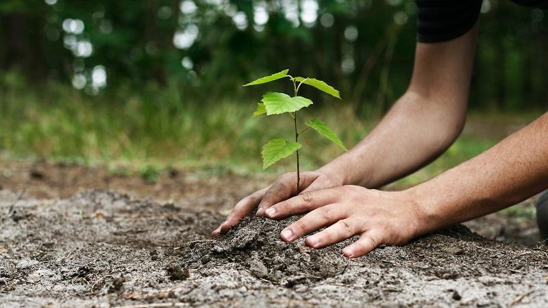 https: img-z.okeinfo.net content 2019 01 10 196 2002783 hari-sejuta-pohon-generasi-muda-harus-paham-pentingnya-peduli-lingkungan-LoAdxAGbs6.jpg