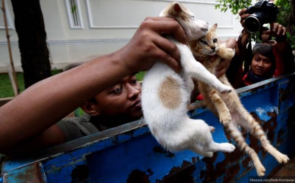 https: img-z.okeinfo.net content 2019 01 10 338 2002338 benarkah-anjing-dan-kucing-liar-membanjiri-jakarta-bagaimana-solusinya-PZOWpCtXJY.jpg