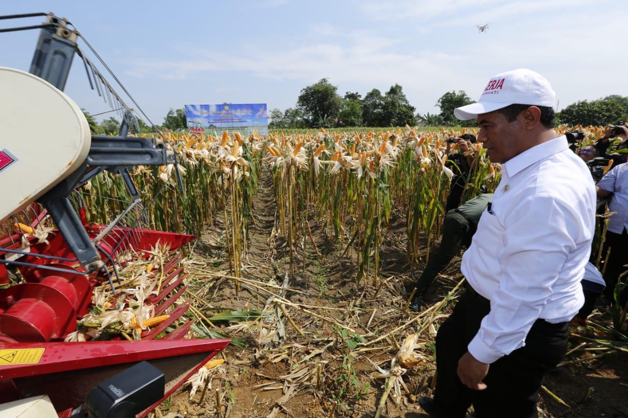 https: img-z.okeinfo.net content 2019 01 12 320 2003541 produksi-padi-dan-jagung-indonesia-meningkat-ini-buktinya-9JcSdjBTjB.jpeg