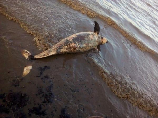 https: img-z.okeinfo.net content 2019 01 13 340 2003686 dua-duyung-ditemukan-mati-di-perairan-dumai-yang-tercemar-limbah-9bTKfIy3mZ.jpg