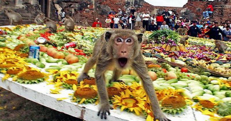 https: img-z.okeinfo.net content 2019 01 13 519 2003775 4-balita-diserang-kawanan-monyet-liar-Mt5VuMv5pQ.jpg