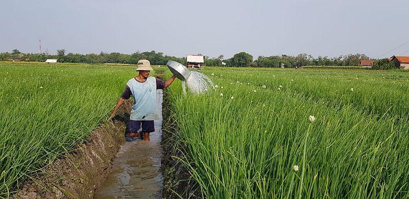 https: img-z.okeinfo.net content 2019 01 17 320 2005919 kontribusi-kementan-tingkatkan-kesejahteraan-petani-hingga-kurangi-kemiskinan-YCkyA1ndLJ.jpg