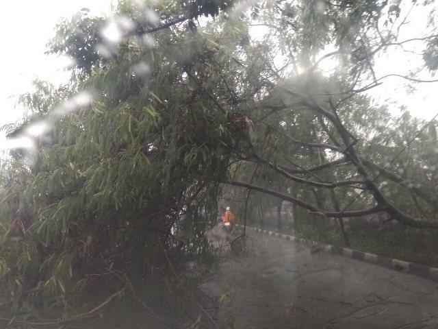 https: img-z.okeinfo.net content 2019 01 22 338 2007713 hujan-deras-pohon-di-kebun-jeruk-tumbang-h3an88KsXO.jpg