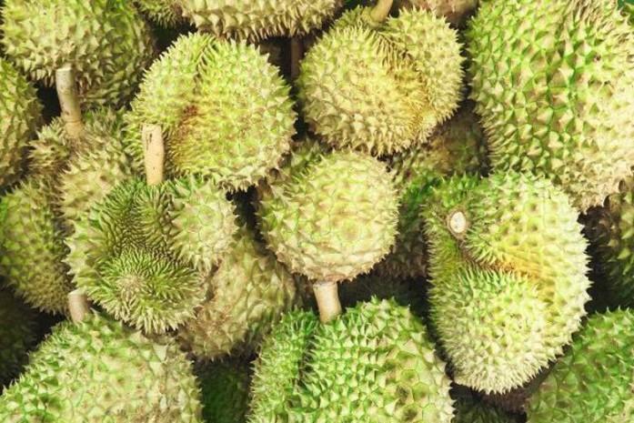 https: img-z.okeinfo.net content 2019 01 27 298 2010118 bukan-mustahil-durian-vulkanik-ini-dibanderol-rp65-juta-mau-coba-2xyNOaPdTj.jpg