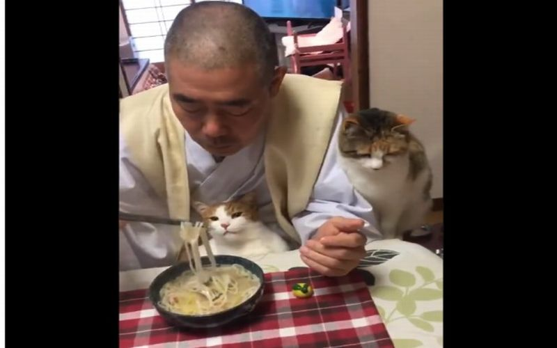 https: img-z.okeinfo.net content 2019 01 28 298 2010545 makan-bareng-kucing-kepala-biarawan-ini-viral-dsnYwz2xSK.jpg