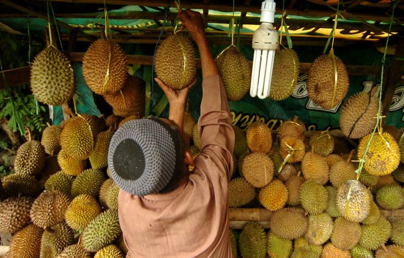 https: img-z.okeinfo.net content 2019 01 30 481 2011198 3-orang-ini-meregang-nyawa-usai-santap-durian-enak-NYVhDwksaf.jpg