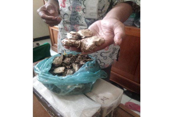 https: img-z.okeinfo.net content 2019 02 02 512 2012860 satu-keluarga-di-wonogiri-keracunan-jamur-kotoran-sapi-warganet-bisa-halusinasi-0FFaarg1Rw.jpg