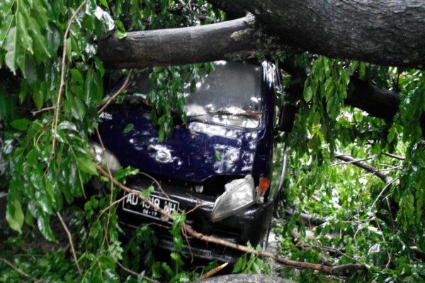 https: img-z.okeinfo.net content 2019 02 04 512 2013786 pohon-tumbang-timpa-warung-dan-mobil-di-mojosongo-solo-zdtZ4qWzBw.jpg