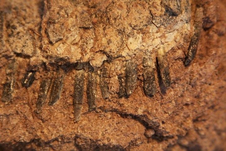 https: img-z.okeinfo.net content 2019 02 06 56 2014440 ilmuwan-teliti-fosil-dinosaurus-dengan-punggung-mohawk-5trU4IW0qC.jpg
