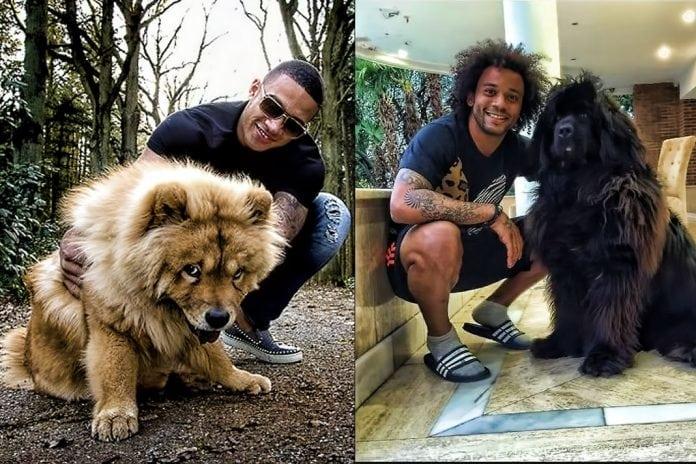 https: img-z.okeinfo.net content 2019 02 07 51 2014782 5-pemain-bintang-yang-miliki-anjing-keren-nomor-1-bak-singa-QTiQHrVOG5.jpg