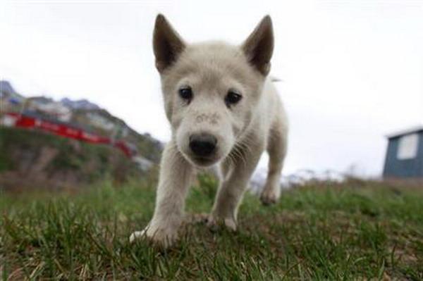 https: img-z.okeinfo.net content 2019 02 08 18 2015451 dokter-hewan-kolombia-dipenjara-karena-selundupkan-heroin-menggunakan-anak-anjing-hidup-Ms9q5BZkZH.jpg