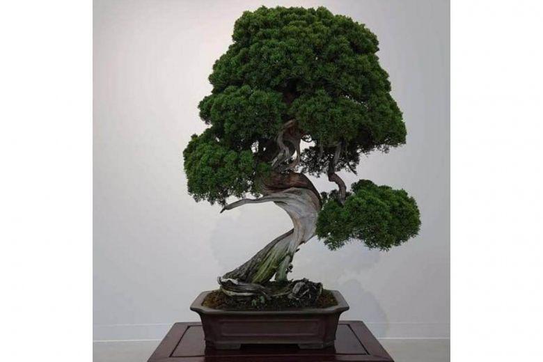 https: img-z.okeinfo.net content 2019 02 12 18 2016816 bonsai-berusia-400-tahun-dicuri-pemilik-kirim-pesan-untuk-malingnya-yhTfwSpyQn.jpg