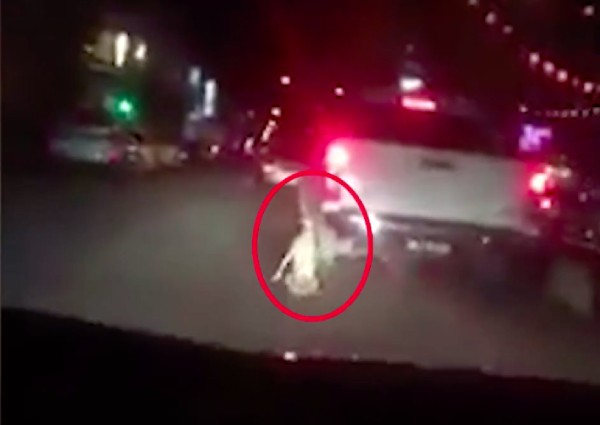 https: img-z.okeinfo.net content 2019 02 12 18 2016941 video-seekor-anjing-diseret-di-belakang-truk-di-malaysia-viral-satu-orang-ditangkap-dx5MbbHrc5.jpg