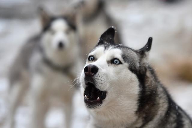 https: img-z.okeinfo.net content 2019 02 14 18 2017973 sambil-direkam-pria-amerika-perkosa-anjing-dengan-mengenakan-kostum-husky-Bo5UlBitBE.jpg