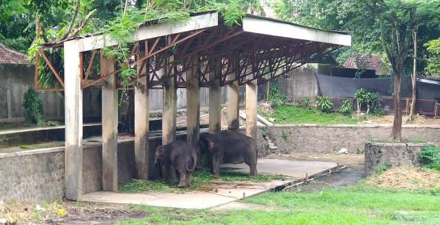 https: img-z.okeinfo.net content 2019 02 17 512 2018999 berusia-tua-gajah-koleksi-tstj-solo-ditemukan-mati-di-kandang-cXnu0phlnv.jpg